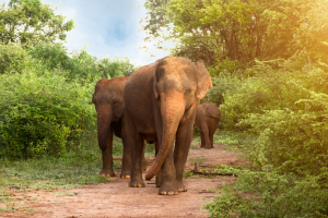 Breakfast with Elephants in Sri Lanka for Less Than $50