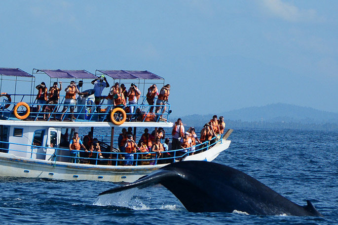 Image result for mirissa whale watching