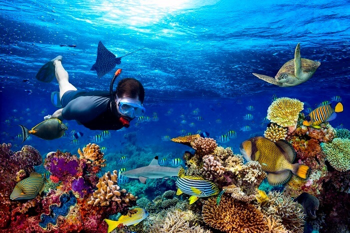 Image result for snorkelling sri lanka