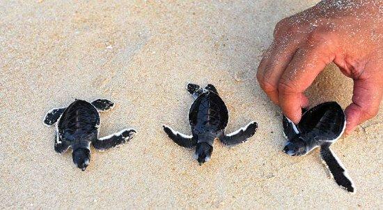 Image result for turtle hatchery sri lanka