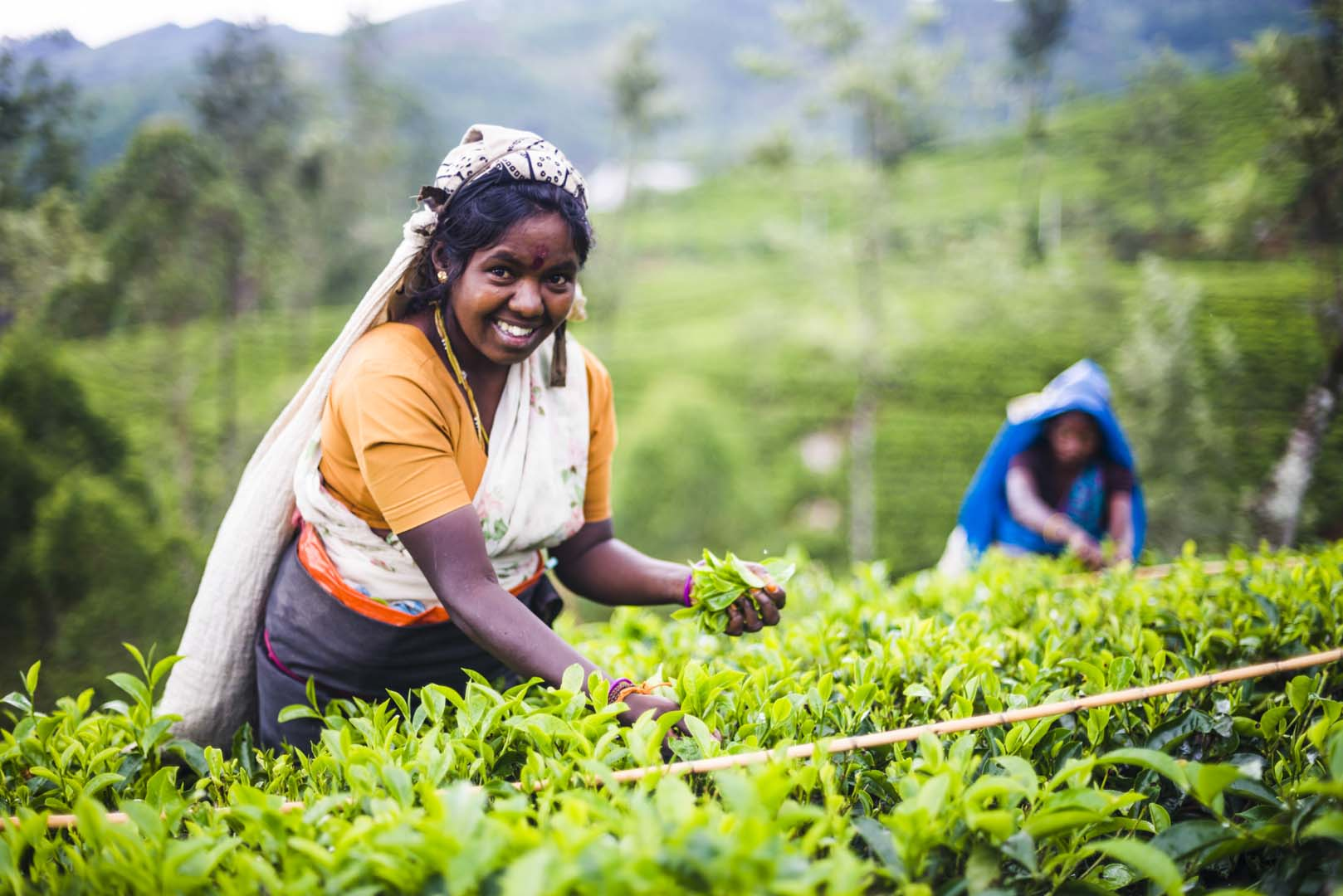 Image result for sri lankan tea workers